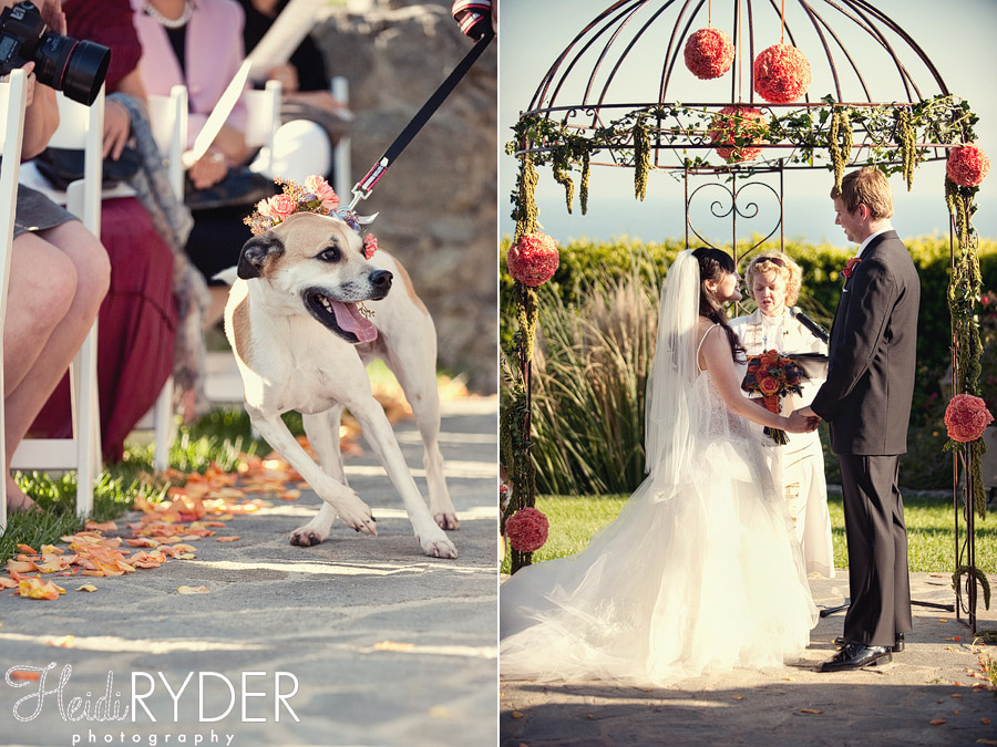 dog in wedding, stone manor malibu ceremony