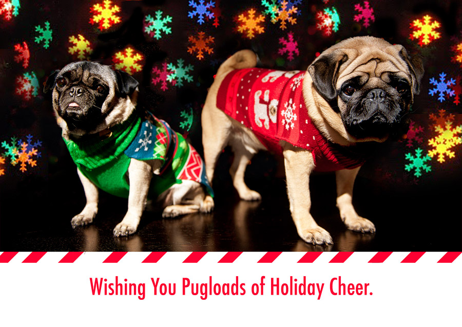 pugloads of holiday cheer